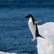 Scared of Penguins: Why Google's Penguin 2.0 Did a Belly Flop